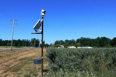 Laser bird deterrent increases crop...
